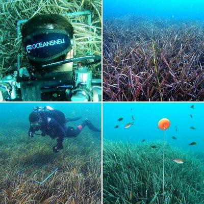 Caracterización de praderas de Posidonia oceanica